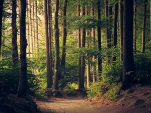 La vita segreta degli alberi: il Bestseller presto in Italia
